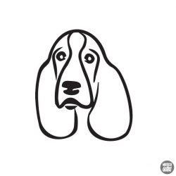 Basset hound matrica 3