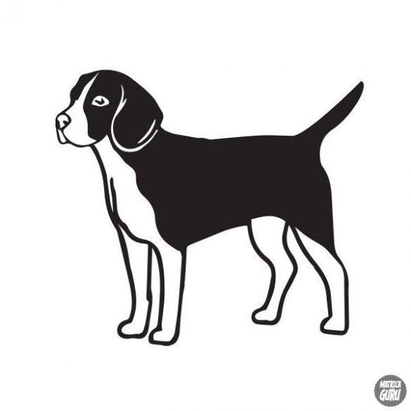 Beagle matrica 7