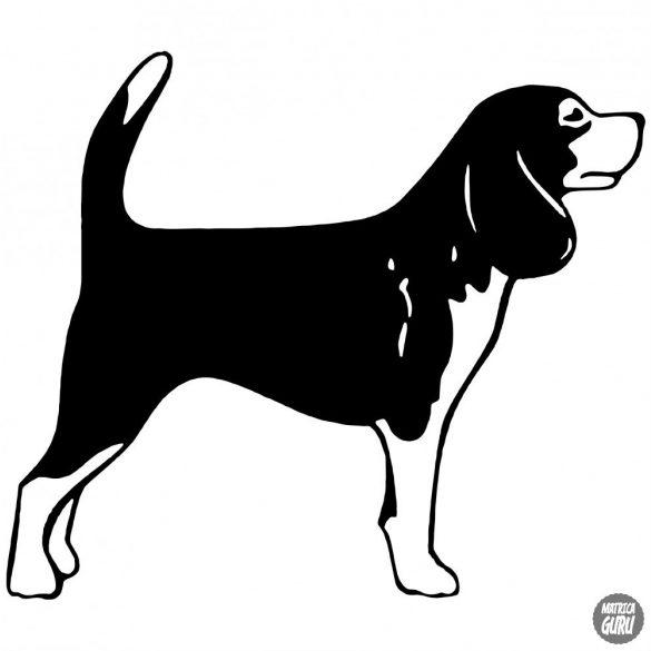 Beagle matrica 11