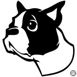 Boston terrier matrica 1