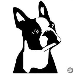 Boston terrier matrica 2