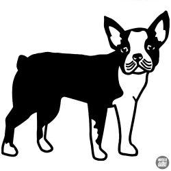 Boston terrier matrica 4