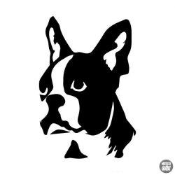 Boston terrier matrica 7