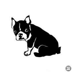 Boston terrier matrica 8