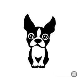 Boston terrier matrica 9
