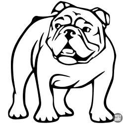 Bulldog matrica 5