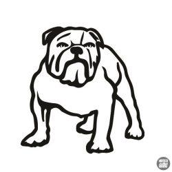 Bulldog matrica 12