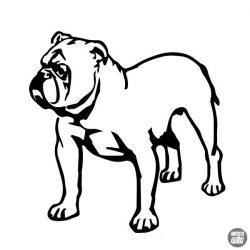 Bulldog matrica 14