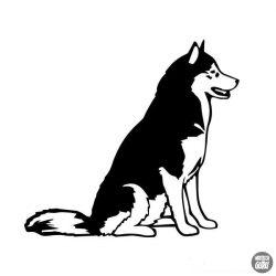 Husky matrica 6