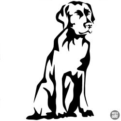Labrador matrica 4