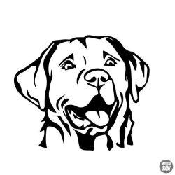 Labrador matrica 6