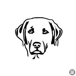 Labrador matrica 13
