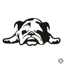 Angol bulldog matrica 12