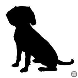 Beagle matrica 16