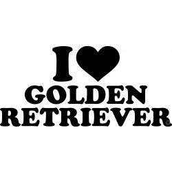 Golden retriever matrica 8