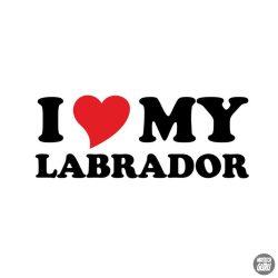 Labrador matrica 17