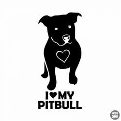 Pitbull matrica 15