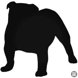 "Angol Bulldog ""1"" matrica"