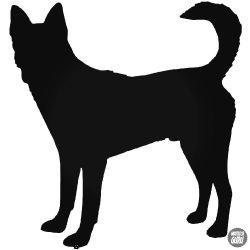 Canaan Kutya matrica