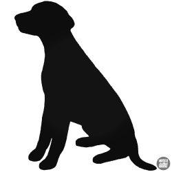 Dalmata kutya matrica