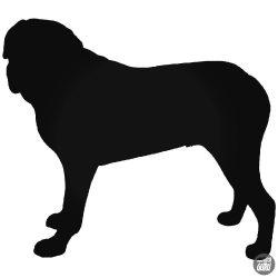 Mastiff Kutya matrica