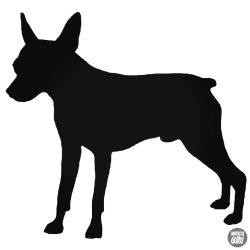 Mini pincser kutya matrica