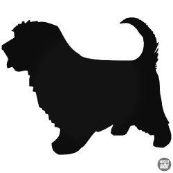 Norfolk Terrier matrica