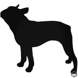 Boston Terrier Kutya matrica